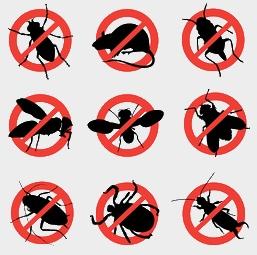 Домосервис - Борьба с насекомыми в Крыму