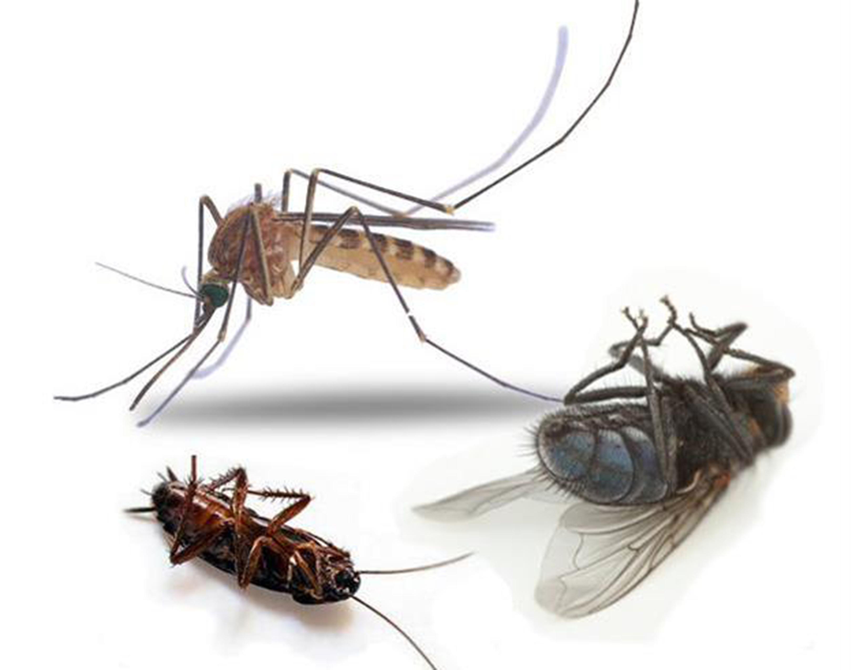 Что такое инсектициды.