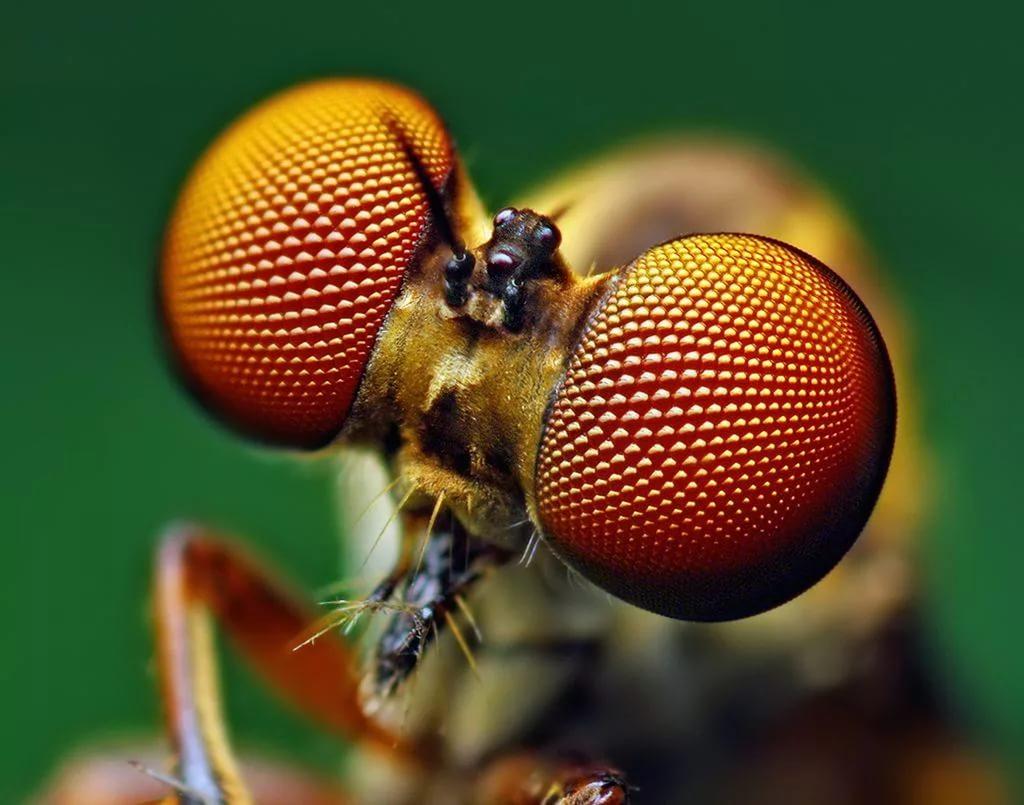 Влияние насекомых на жизнь человека, насекомые как переносчики опасных заболеваний.