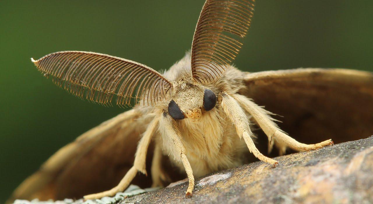 Моль – небольшая бабочка